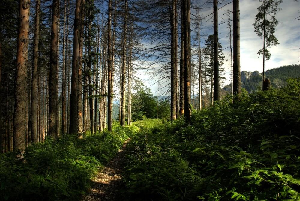 Droga leśna w górach